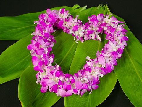 You are currently viewing Ho'oponopono Mantra & Morrnah's Prayer   Hawaiian