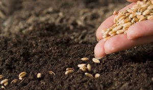 Read more about the article AMRA's Law II: The Law of the Seed